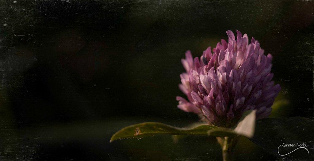 Nature-12.jpg
