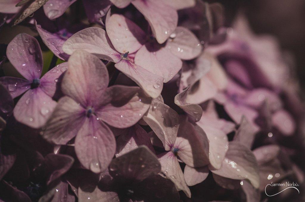 Nature-002.jpg