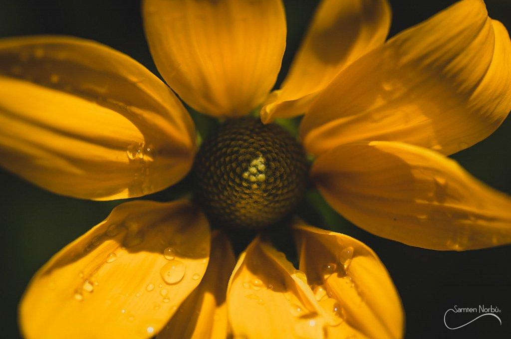 Nature-003.jpg