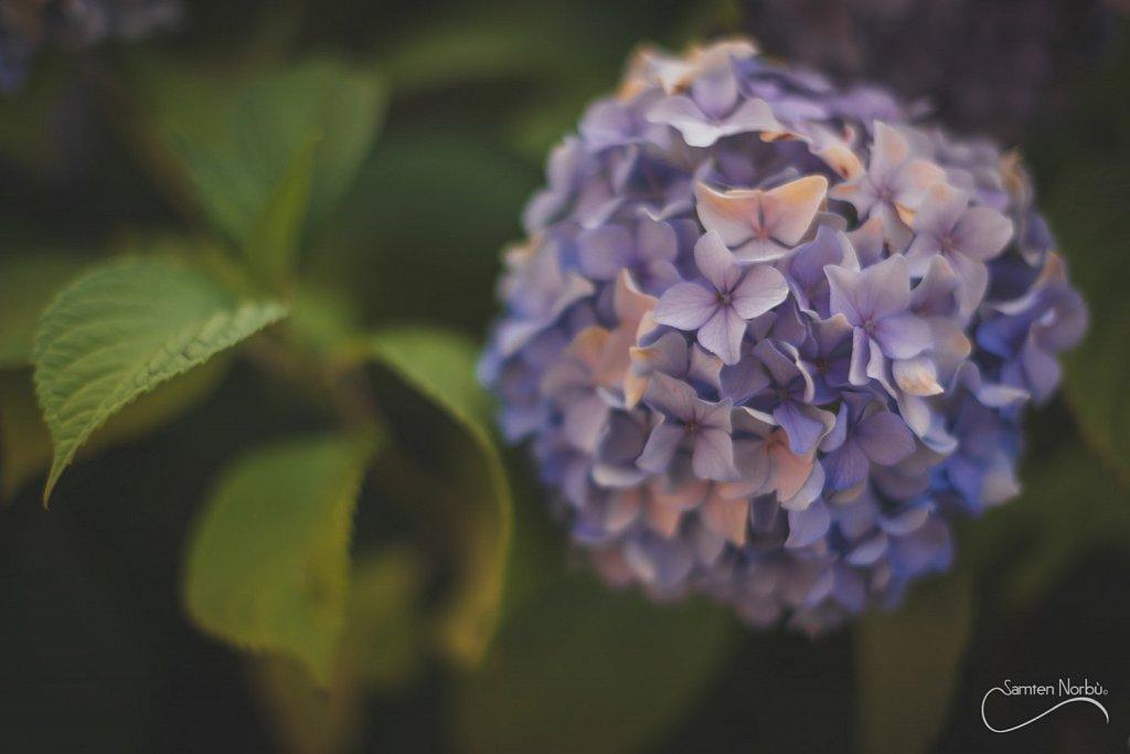 Nature-008.jpg