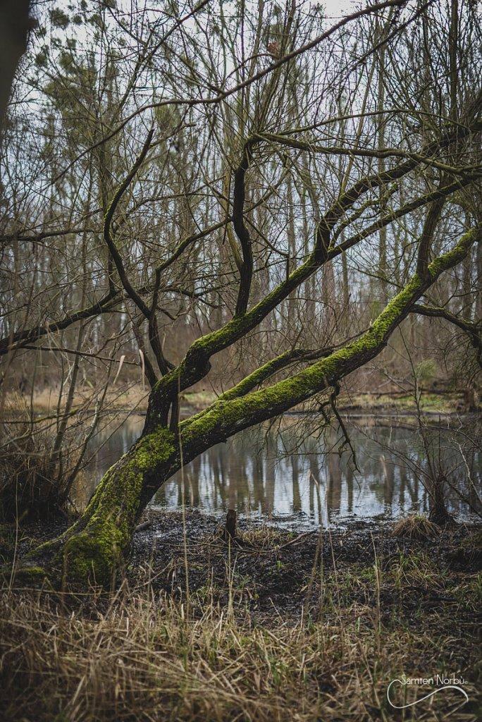 Nature-014.jpg