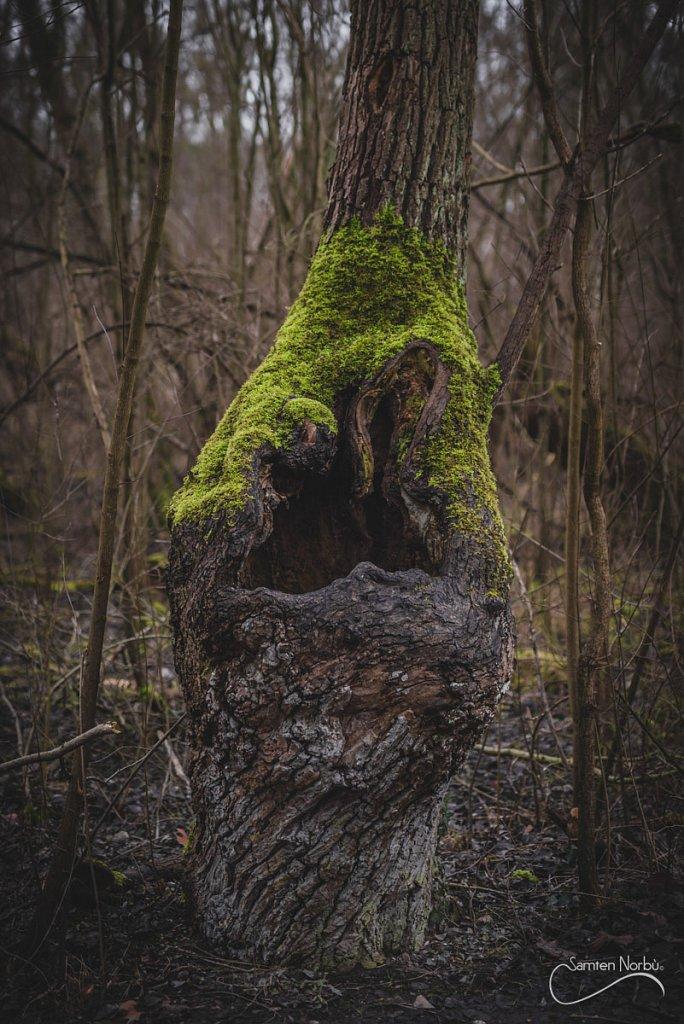 Nature-017.jpg