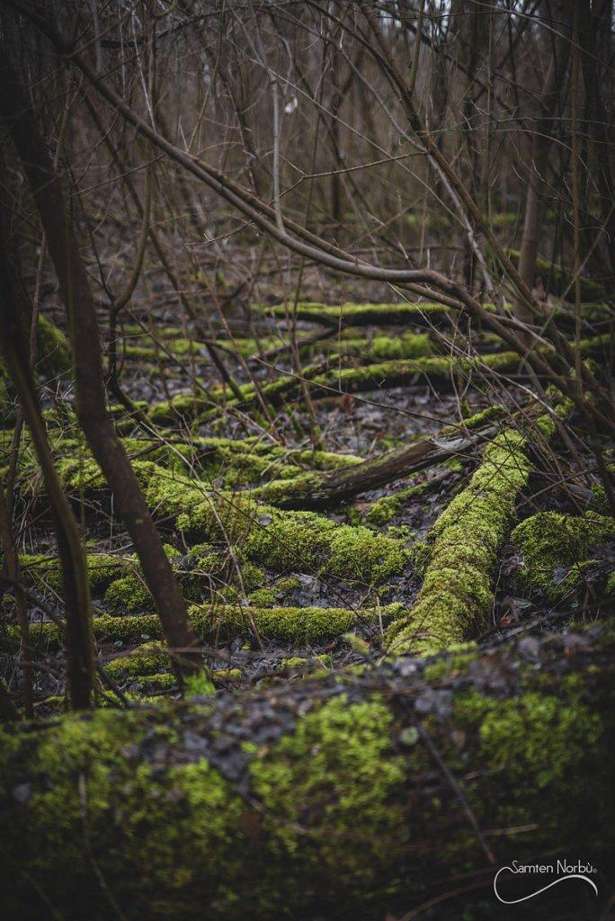 Nature-019.jpg
