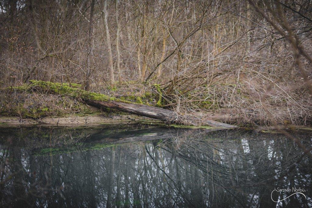Nature-020.jpg