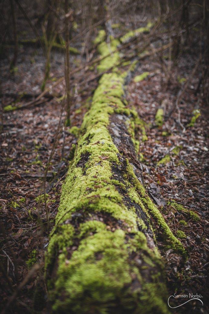Nature-021.jpg