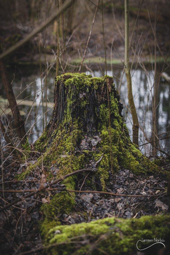 Nature-022.jpg