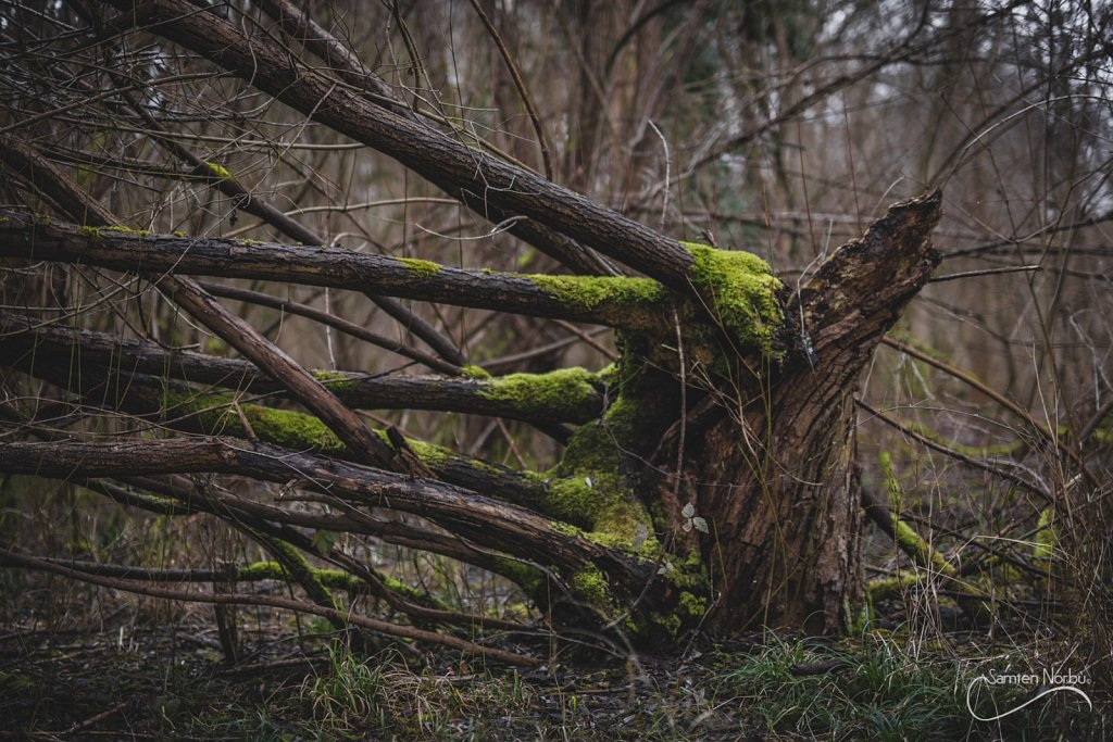 Nature-023.jpg