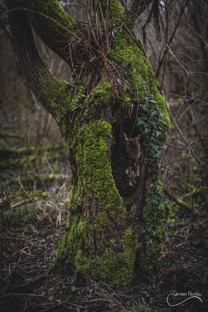 Nature-025.jpg