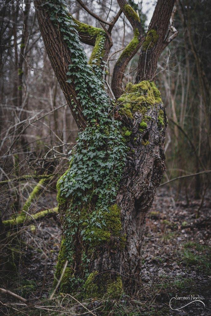 Nature-026.jpg