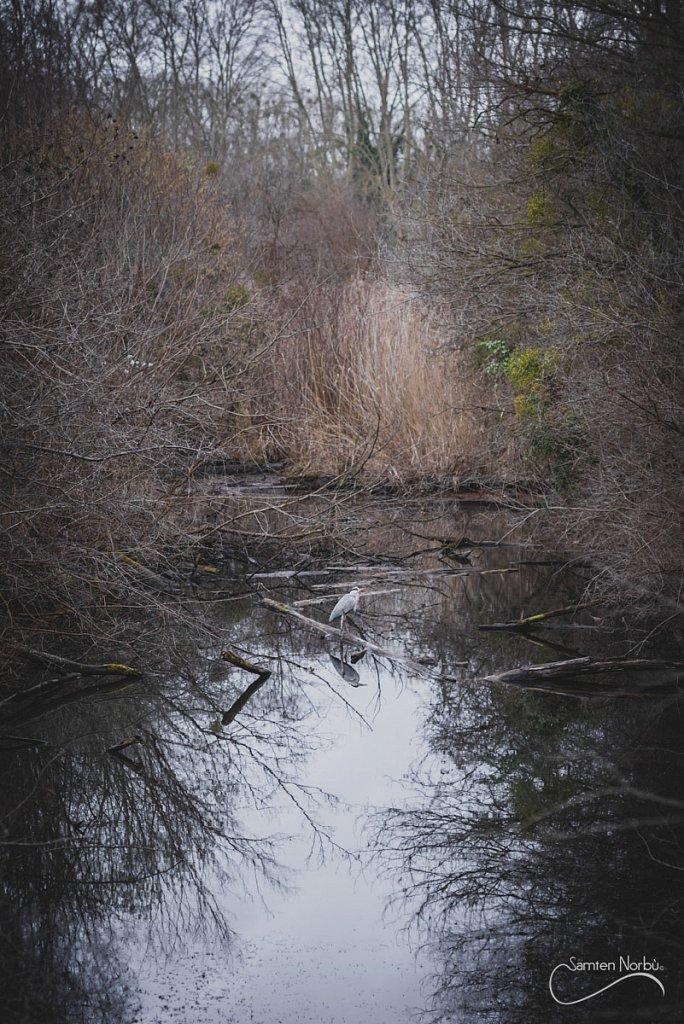 Nature-027.jpg