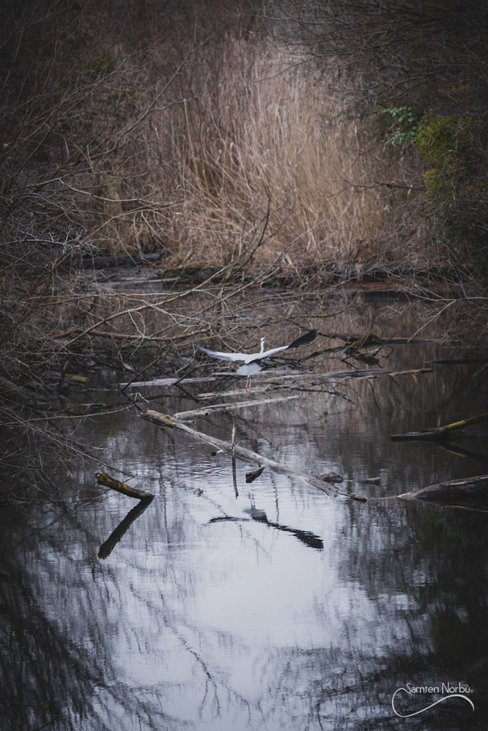 Nature-028.jpg