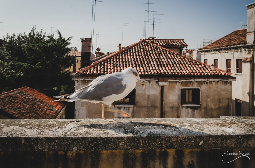 Venise-004.jpg