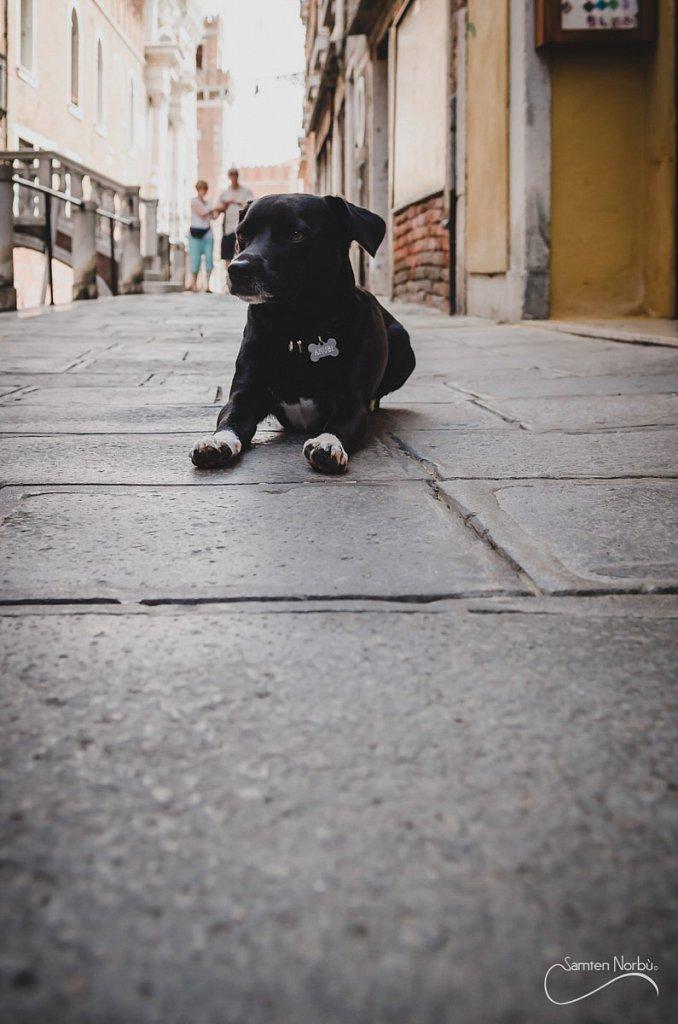 Venise-059.jpg