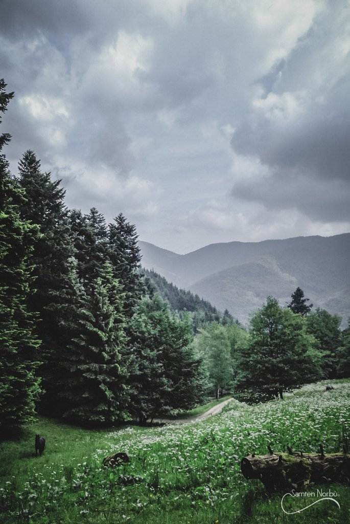 Vosges-006.jpg