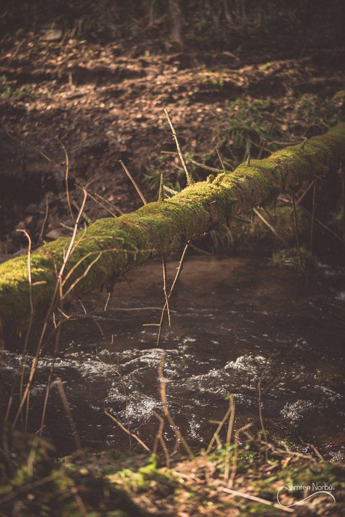 Vosges-016.jpg