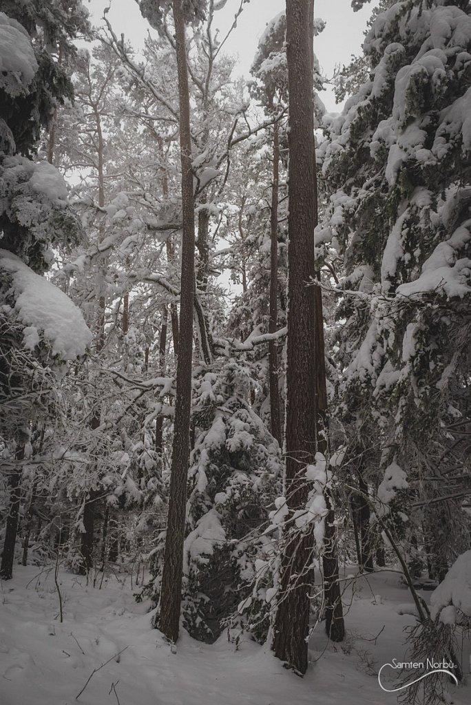 Vosges-027.jpg