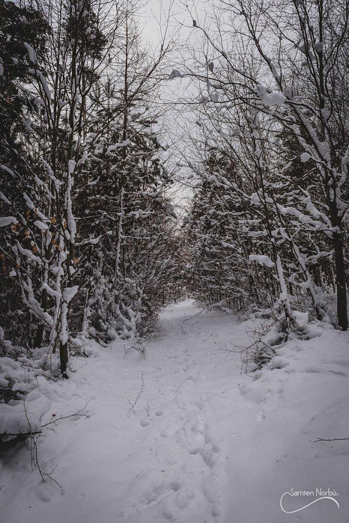 Vosges-031.jpg