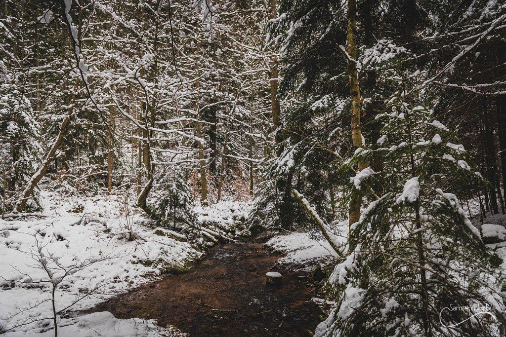 Vosges-036.jpg