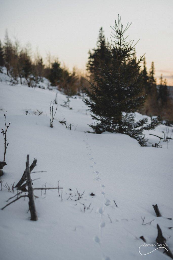 Vosges-047.jpg