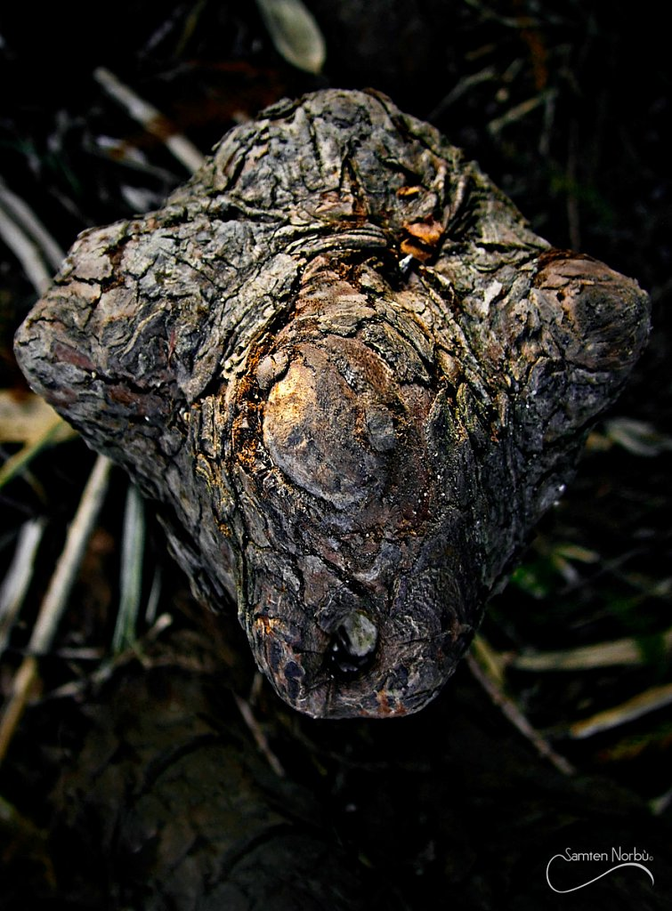 Nature-06.jpg
