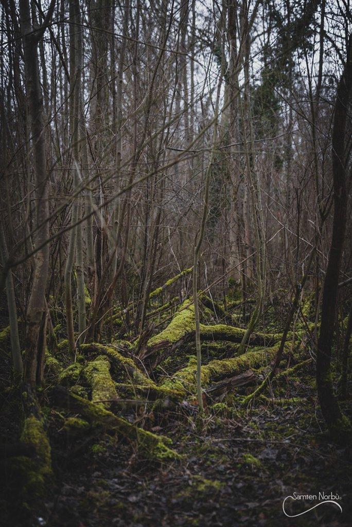 Nature-016.jpg