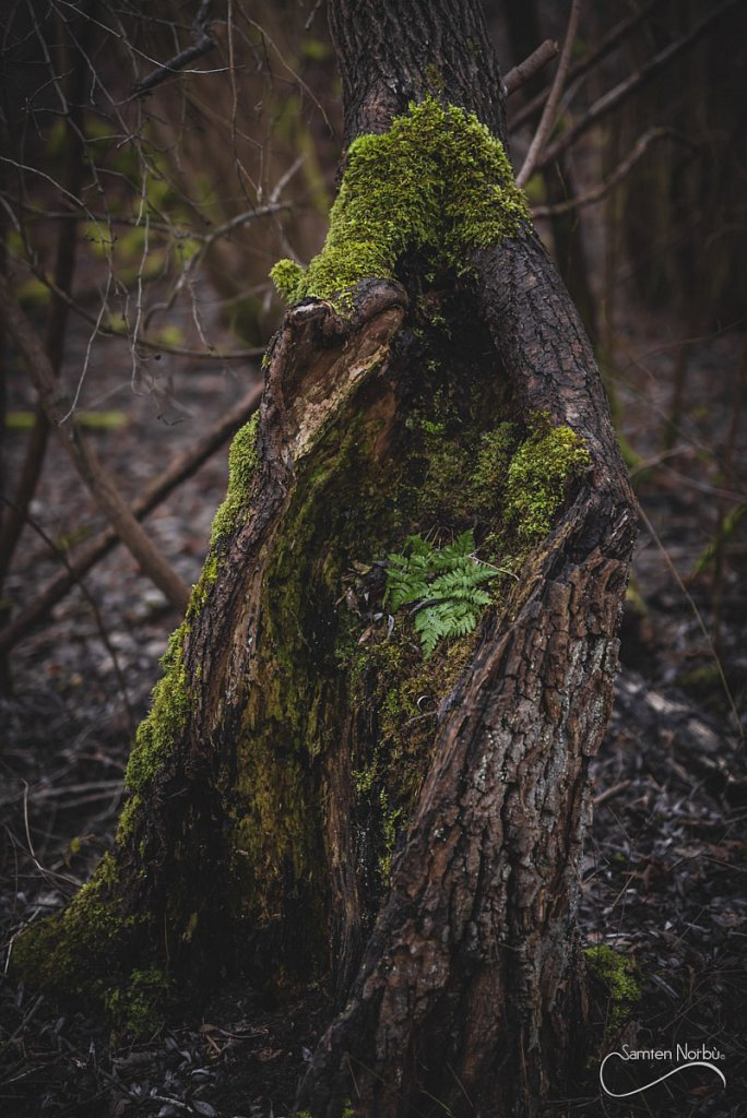 Nature-024.jpg