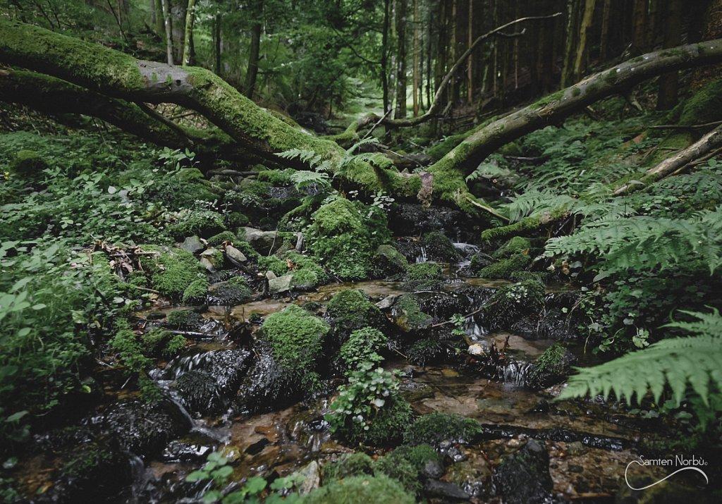 Vosges-004.jpg