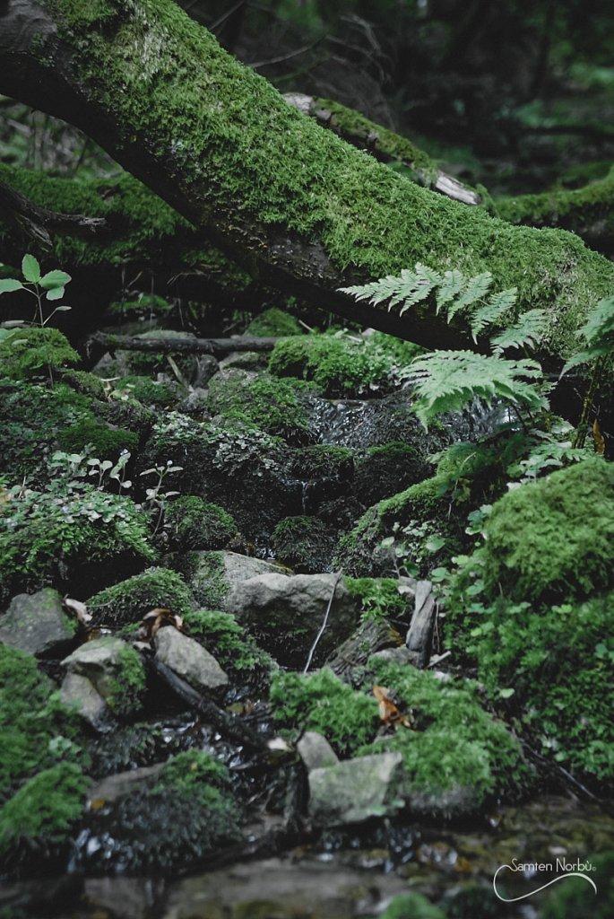Vosges-005.jpg