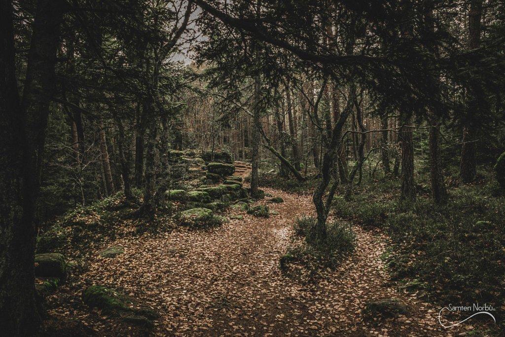Vosges-010.jpg