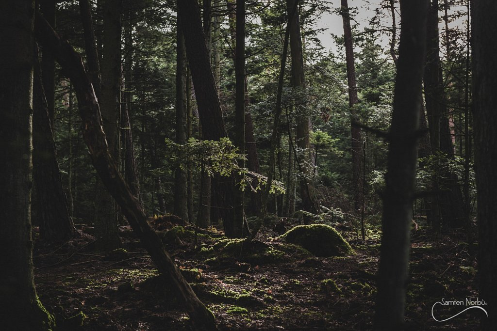 Vosges-011.jpg