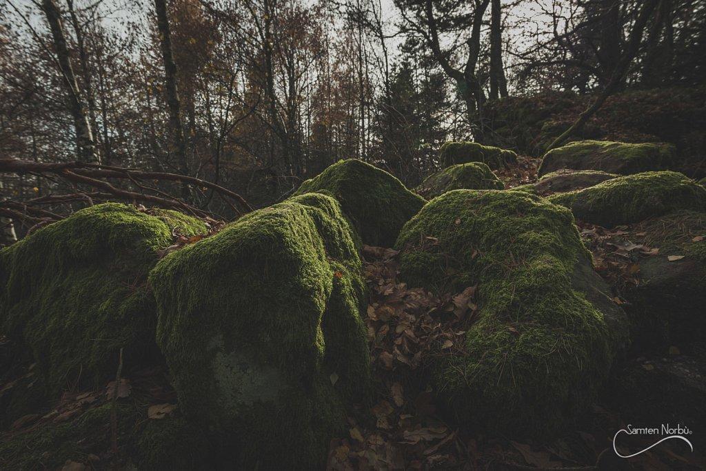 Vosges-012.jpg