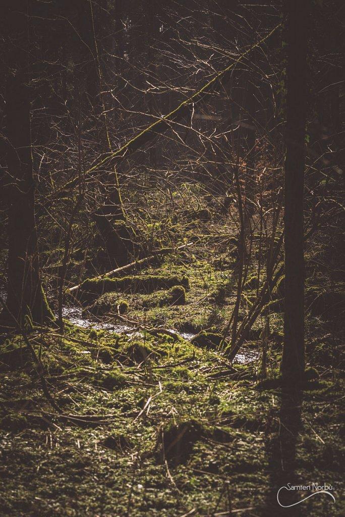 Vosges-013.jpg