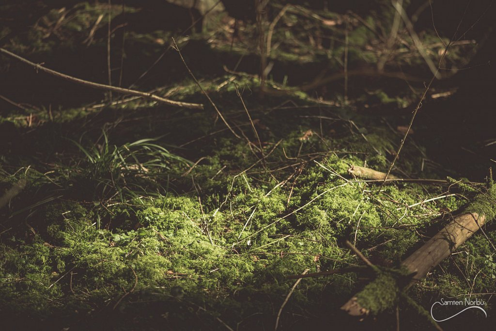 Vosges-017.jpg