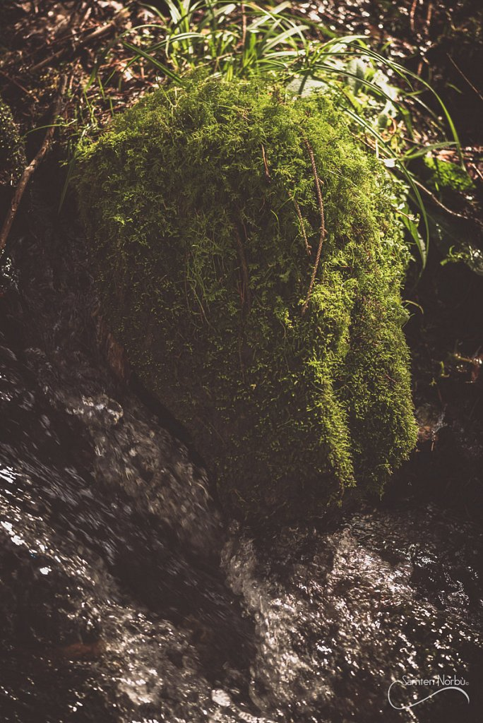Vosges-019.jpg