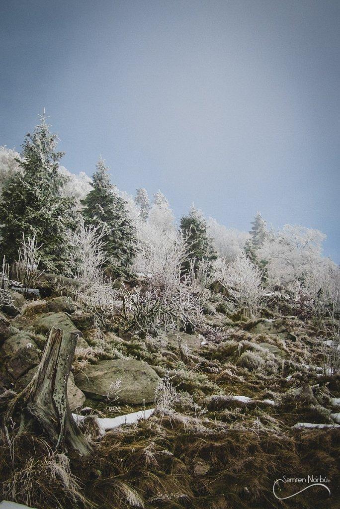 Vosges-052.jpg