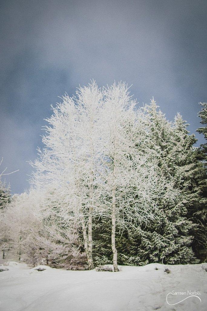 Vosges-053.jpg